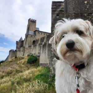 Jane Heyes Art Peintre Carcassonne Artist Morris castle Spring painting inspiration