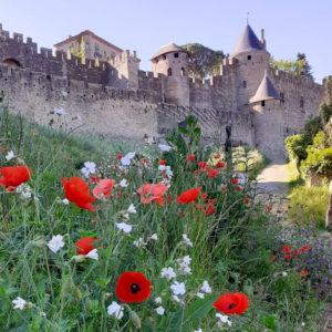 Jane Heyes Art Peintre Carcassonne Artist Poppies inspiration Spring